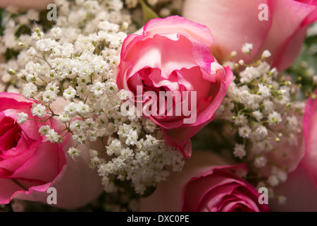 Closeup photo of pink roses and baby's breath - Stock Photo
