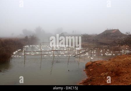 Duck Pond near Phonsavan in Lao Peoples Democratic Republic - Stock Photo