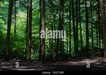 Forest near Yuhi waterfall in Odawara, Kanagawa Prefecture, Japan - Stock Photo