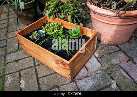 Wine case made into a herb garden. - Stock Photo