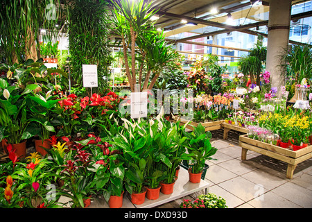 Red pots with green plants on an old stone staircase Stock Photo ...