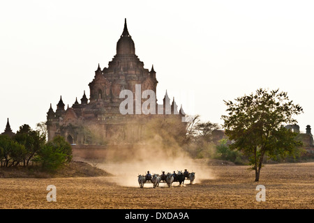 Farmers drive their ox carts across a dusty plain infront of an ancient stupa in Bagan, Myanmar. - Stock Photo