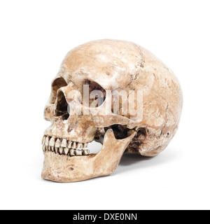 single human skull isolated on white background - Stock Photo