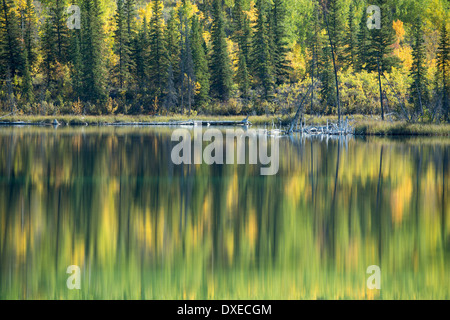 Autumn colours nr Pelly Crossing, Yukon Territories, Canada - Stock Photo