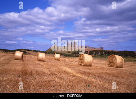 Dunstanburgh castle from field, Northumbria - Stock Photo