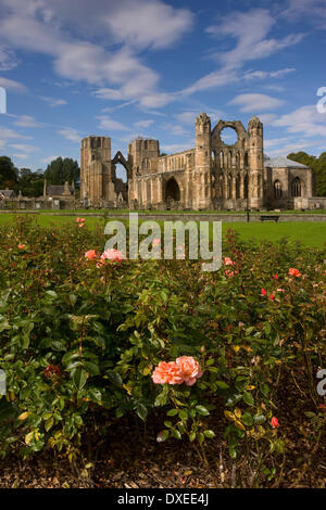 Summer view of Elgin cathedral from rose beds,Elgin,Moray - Stock Photo