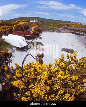 Springtime on the island of Gigha Argyll - Stock Photo