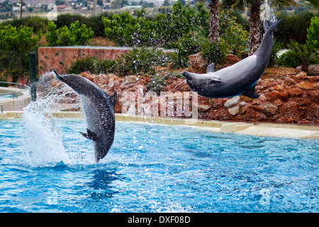 Dolphins jumping in formation in an aquarium - Stock Photo