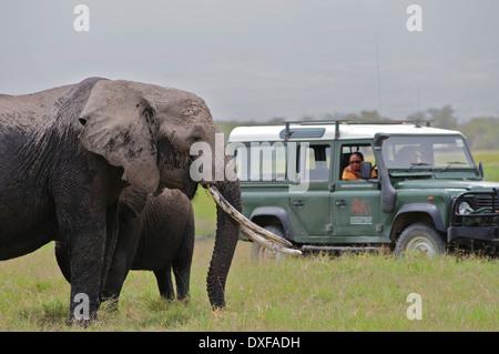 Famous African Elephant, Echo, with the women of Amboseli Trust For Elephants studying her behaviour. Amboseli Kenya - Stock Photo