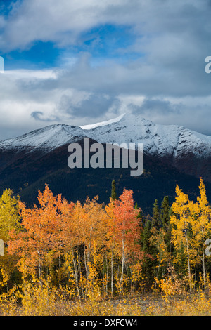 Autumn colours of the boreal forest in the Stewart River valley, Yukon Territories, Canada - Stock Photo