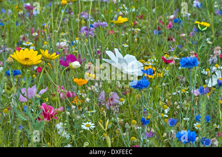 colorful flower meadow - Stock Photo