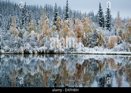 Autumn colours and the first snowfall at Five Mile Lake. Silver Trail, Yukon Territories, Canada - Stock Photo