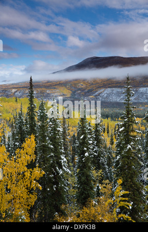 Autumn colours and the first snow in the Stewart River Valley, Yukon Territories, Canada - Stock Photo