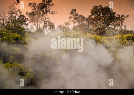 Steam vents amidst ohia and ferns in Volcanoes National Park, Hawaii. - Stock Photo