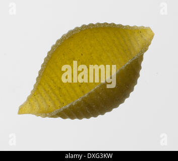 Green Conchiglie Pasta Shell On White Background - Stock Photo
