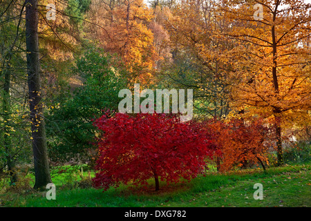 Woodland trees and Autumn colors in North Yorkshire in the United Kingdom. - Stock Photo