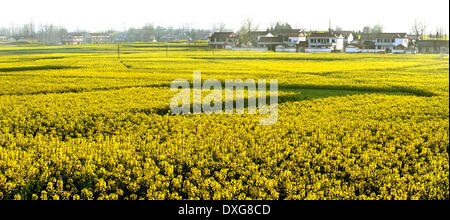 Hanzhong. 26th Mar, 2014. Photo taken on March 26, 2014 shows the scenery of blooming cole flowers in Hantai District - Stock Photo