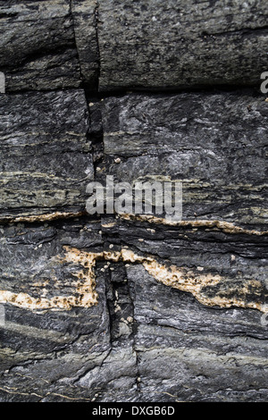 Close up of metamorphic rock at Saligo Bay, Islay, showing fault lines in rock and quartz intrusion - Stock Photo