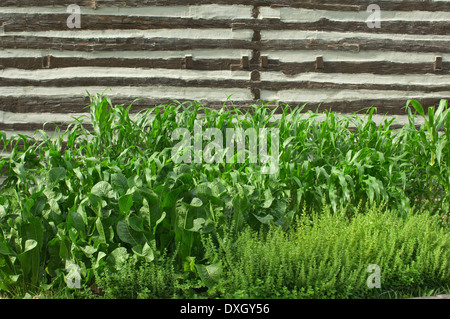 Vintage Farming Vegetable Garden With An Old Wine Barrel At The Stock Photo Royalty Free Image