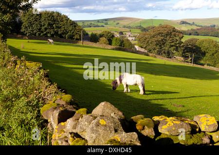 Horse in Pasture, Yorkshire Dales National Park, United Kingdom