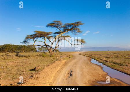 Kenya, Rift Valley, Masai Mara National Park - Stock Photo