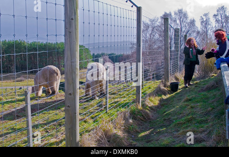 Animal keeper gives talk to visitors at polar bear feeding time, in showery wintry weather, Highland Wildlife Park, - Stock Photo