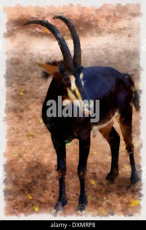 antelope latin singles There are many different species of antelope including the tiny royal antelope that stands at the height of a  female antelopes give birth to a single calf.