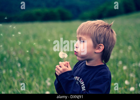 Little boy with blowball - Stock Photo