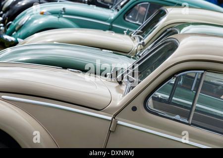 Beetle Bonnets. - Stock Photo