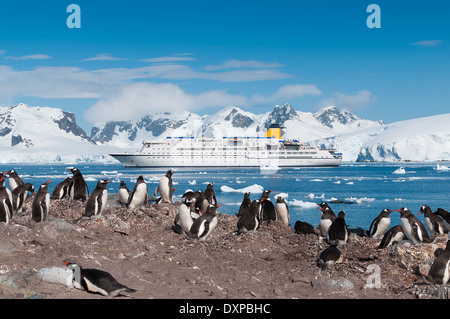 Antarctica penguin colony with cruise liner - Stock Photo
