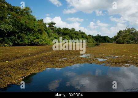 Belize, Crooked Tree Wildlife Sanctuary. Waterway view. - Stock Photo