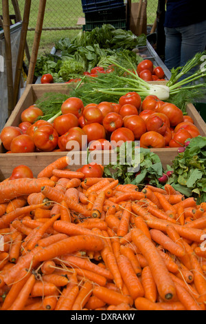 Tomatoes, carrots, celery, lettuce and other vegetables at a stand at Organic Fair - Stock Photo
