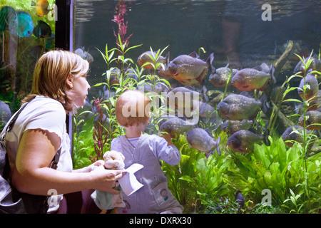 A child and mother looking at fish, Dubai Aquarium and Underwater zoo, Dubai Mall, Dubai UAE, united Arab Emirates - Stock Photo