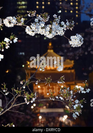 Tokyo, Japan. 29th Mar, 2014. Full bloomed cherry blossoms are lit up at Tokyo's Ueno Park, one of the best spots - Stock Photo