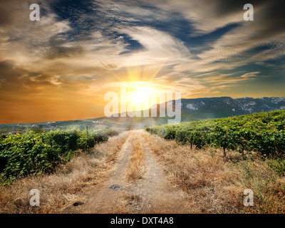 Country road through a vineyard in autumn - Stock Photo