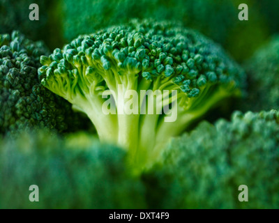 Extreme close up of raw broccoli - Stock Photo