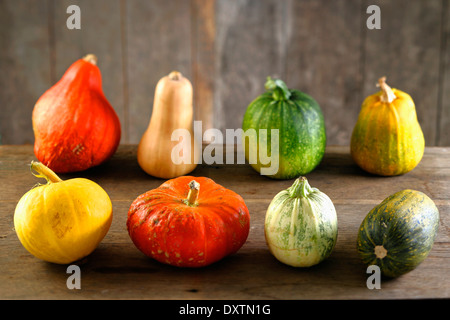 Assorted pumpkins and squashes - Stock Photo