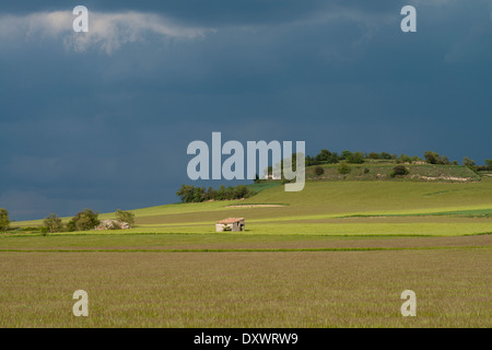 Wheat (Triticum vulgare) field in spring, Spain - Stock Photo