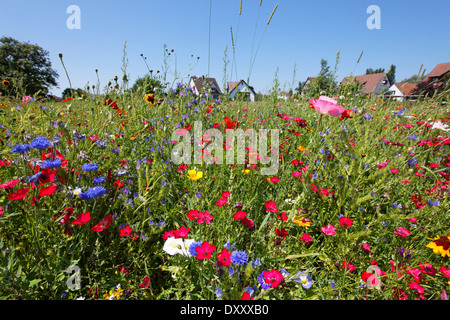 Germany, Lake Constance, Reichenau Iceland, middle cell, flower Deutschland, Bodensee, Reichenau Island, Mittelzell, - Stock Photo