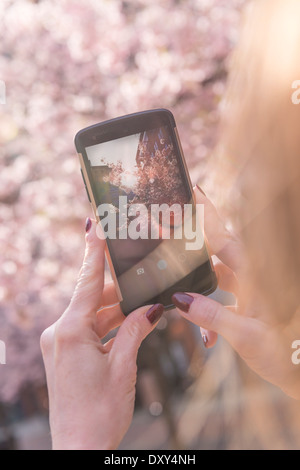 Woman taking a photo on her mobile phone of Cherry Blossom - Stock Photo