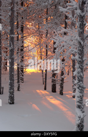Sun shining through snow covered trees. Lighting the snow on the ground. - Stock Photo