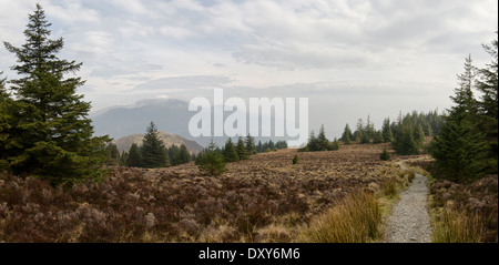 A panorama from a path at the top of Whinlatter forest. Barf and Skiddaw fells can be seen in the distance on the - Stock Photo