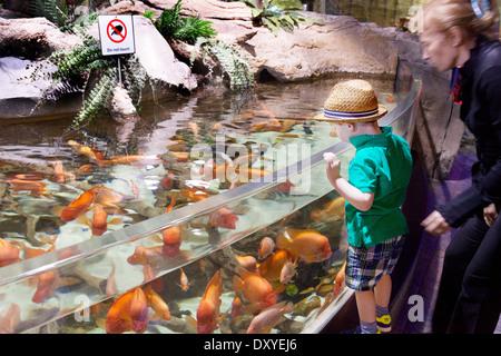 A mother and child looking at fish, Dubai Aquarium and Underwater Zoo, Dubai Mall, UAE, United Arab Emirates - Stock Photo