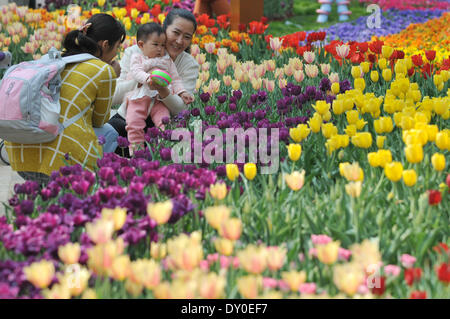 Zhengzhou, China's Henan Province. 2nd Apr, 2014. Tourists view tulip flowers at a park in Zhengzhou, capital of - Stock Photo