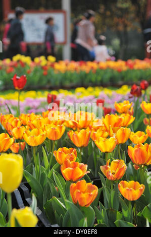 Zhengzhou, China's Henan Province. 2nd Apr, 2014. Tulip flowers are in blossom at a park in Zhengzhou, capital of - Stock Photo