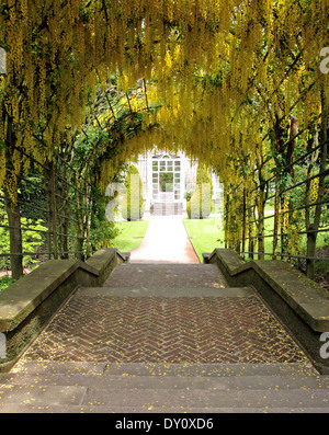 laburnum arch in flower, over block paved path with Victorian glasshouse - Stock Photo