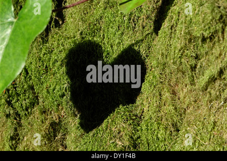 Green moss on tree trunk stock photo royalty free image for What is a tree trunk covered with 4 letters