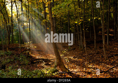 Morning sunlight filters through the trees along Nine Mile Creek in Bloomington, MN. - Stock Photo