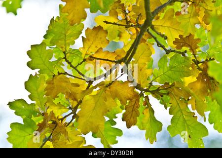 Colors of Autumn, Lidice Park, Czech republic - Stock Photo