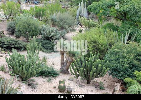 Cactus gardens in Mexico on a sunny day Stock Photo: 310453489 - Alamy